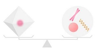 ラメリアプレミアム 繊維芽細胞の関係
