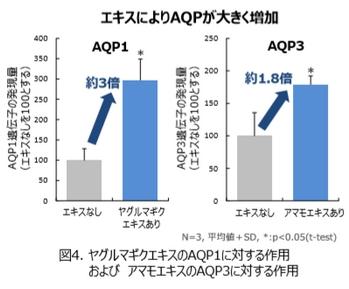 POLA・エキスによるアクアポリン増加